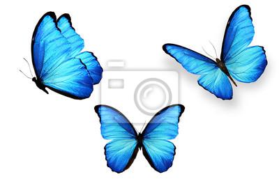 Sticker ensemble de papillons bleus isolé sur fond blanc
