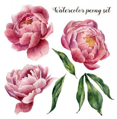 Sticker Ensemble de pivoine aquarelle. Vintage éléments floraux avec des fleurs et des feuilles de pivoine isolé sur fond blanc. Main, dessiné, botanique, Illustration, conception