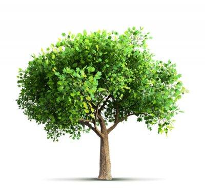 Sticker Érable, arbre, isolé