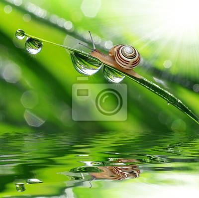 Escargot sur l'herbe humide de rosée