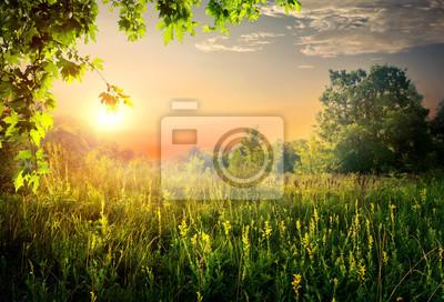 Été beau coucher de soleil