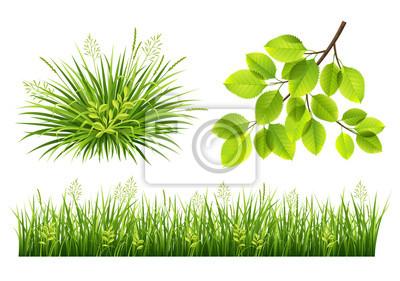 Été, herbe, feuilles