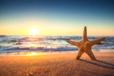 Sticker Étoiles de mer sur la plage au lever du soleil