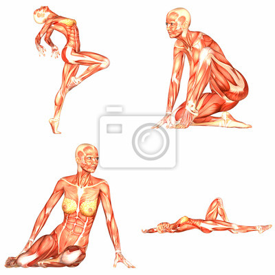 Anatomie Corps Humain Femme femme anatomie de corps humain pack - 3of5 stickers pc portable