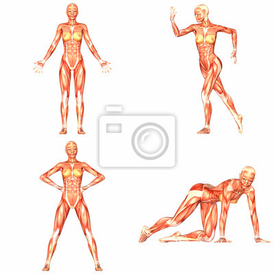 Anatomie Corps Humain Femme femme anatomie de corps humain pack - 4of5 stickers pc portable