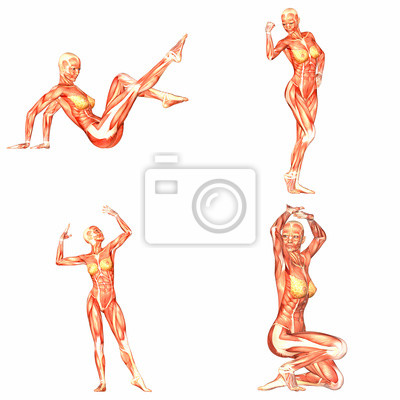 Anatomie Corps Humain Femme femme du corps humain anatomie pack - 2of5 stickers pc portable