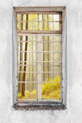 Sticker Fenêtre, vieux, ciment, maison, forêt, vue