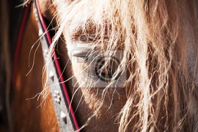 Fermez fatigué portrait de cheval. Mise au point sélective