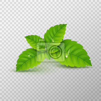 Sticker Feuille de menthe fraiche. Arôme sain de menthol vectoriel. Plante herbacée. Feuilles à la menthe verte