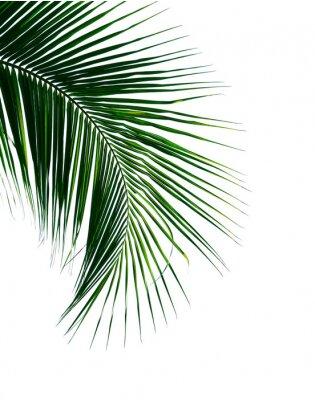 Sticker feuille de palmier de noix de coco tropical isolé sur fond blanc