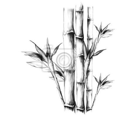 Sticker Feuilles Branches Tige Bambou Modèle Fleurs Texture Cadre Sans