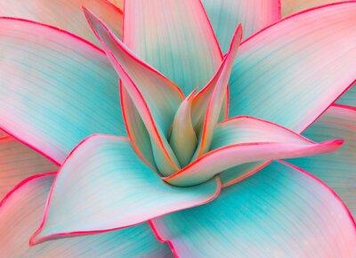 Sticker feuilles d'agave dans des couleurs pastel à la mode pour les arrière-plans de conception