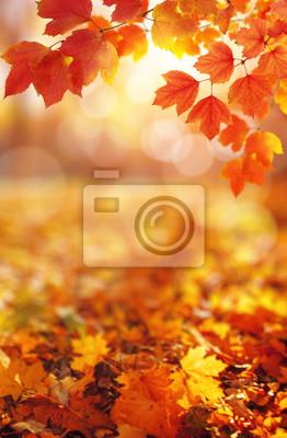 Feuilles d'automne au soleil.
