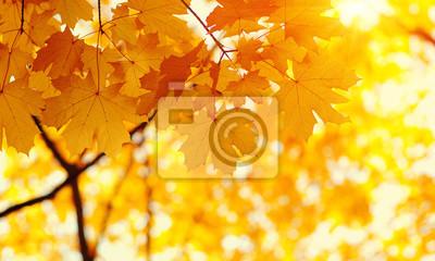 Feuilles d'automne sur fond de nature floue.