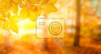 Feuilles d'automne sur le soleil