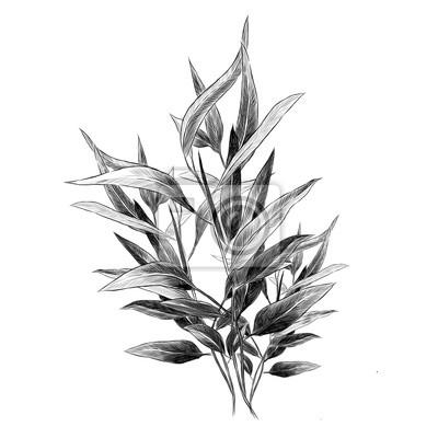 Sticker Feuilles d'eucalyptus croquis vecteur graphique branche monochrome