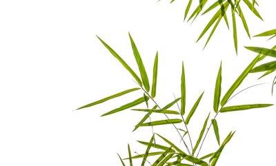 Sticker feuilles de bambou isolé sur fond blanc, chemin de découpage compris
