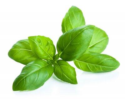 Sticker feuilles de basilic isolé