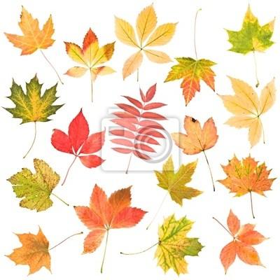 feuilles de l'automne