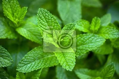 Sticker feuilles de menthe