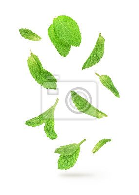 Sticker feuilles de menthe verte tombant dans l'air isolé sur blanc backgroun