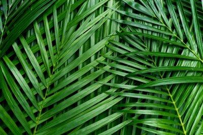 Sticker Feuilles de palmier, fond de verdure