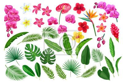 Sticker feuilles et fleurs tropicales