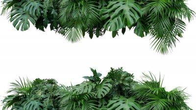 Sticker Feuilles tropicales feuillage plante buisson arrangement floral nature toile de fond isolé sur fond blanc, un tracé de détourage inclus.