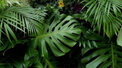 Sticker Feuilles tropicales vertes Fond de Monstera, palmier, fougère et plantes ornementales