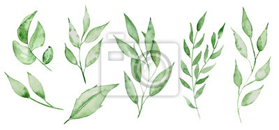 Sticker Feuilles vertes aquarelles et brunchs Illustration vert bruns herbe main