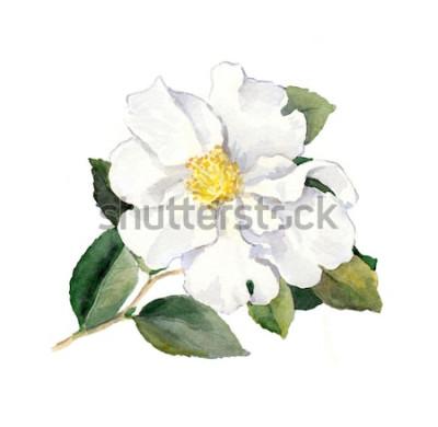 Sticker Fleur blanche. Illustration botanique aquarelle