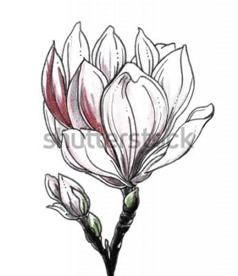 Sticker Fleur de fleur tropicale de magnolia blanc sur fond blanc. La main dessinée aquarelle illustration monochrome botanique noir et blanc pour mariage impression, carte, invitation. Style japonais. Rétro,