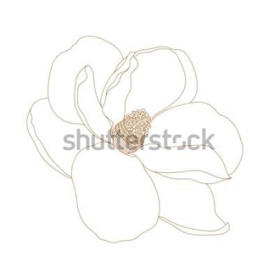 Sticker Fleur de Magnolia, vue de dessus, isolé sur blanc. Fleurs de magnolia dessinés à la main graphique. Fleur de Vector.Magnolia dessin et croquis avec dessin au trait noir et blanc.