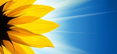 Sticker Fleur de tournesol soleil sur fond de ciel bleu