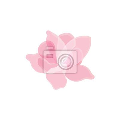Fleur, rose, pétales