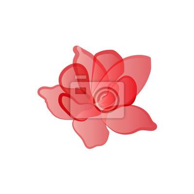 Fleur, rouges, pétales