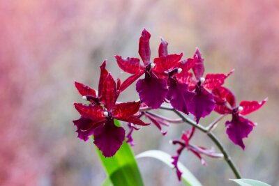 Sticker Fleurir, branche, orchidées, marron, fleurs