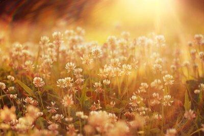 Sticker Fleurs d'été fond de paysage de rayons du soleil