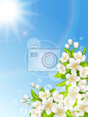 Fleurs de cerisier sur fond de ciel bleu