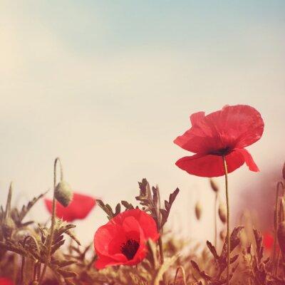 Sticker Fleurs de coquelicot rétro image stylisée