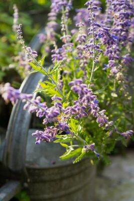 Sticker Fleurs de lavande dans le jardin Arrosoir