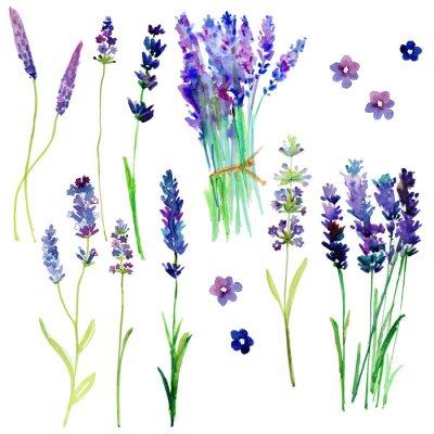 Sticker Fleurs de lavande de Provence isolées. Ensemble floral aquarelle pour votre design.