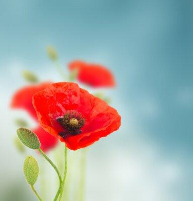 Sticker Fleurs de pavot