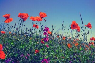 Sticker Fleurs de pavot contre le ciel