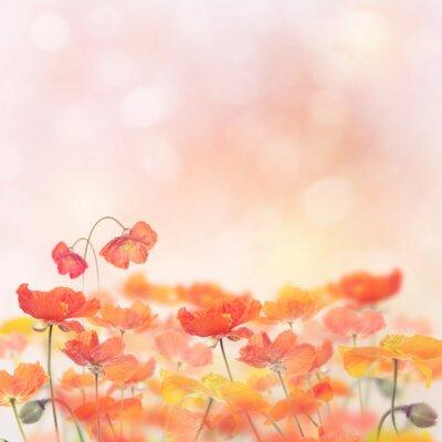 Sticker Fleurs de pavot fleurs