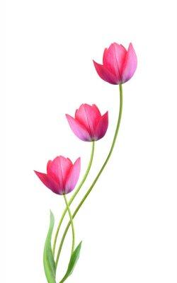 Sticker Fleurs de trois tulipes isolés sur fond blanc