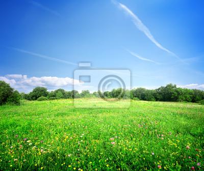 Fleurs des champs lumineux