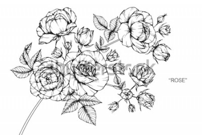 Sticker Fleurs roses dessin et esquisse avec dessin au trait sur fond blanc.
