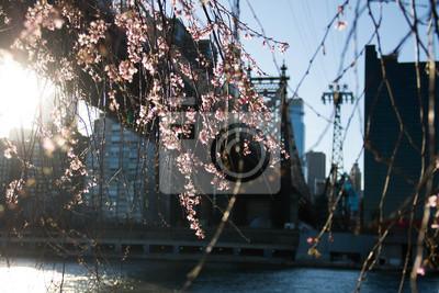 Fleurs roses minuscules et fond de ville floue
