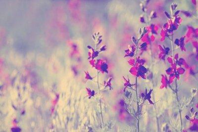 Sticker fleurs sauvages pourpres